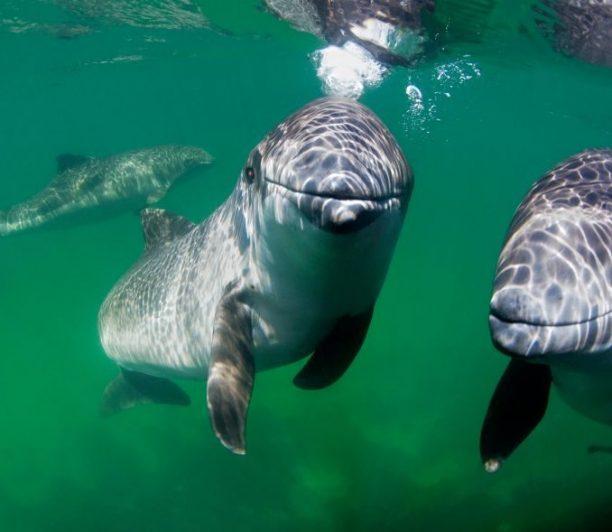 Meeressäuger stehen im Fokus des Horizon 2020-Projektes Marine Mammals