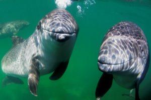 Meeressäuger stehen im Fokus des Symposium Marine Mammal