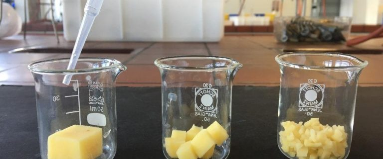 Experiment mit Kartoffeln zum Thema nano im nawi:klick!