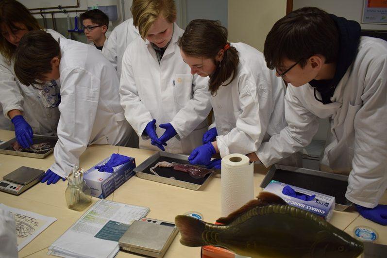Die Teilnehmerinnen und Teilnehmer der Ferienakademie sezieren Tintenfische und Heringe.