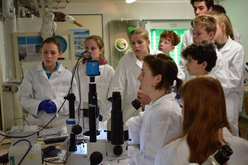 Auch mit dem Mikroskop arbeiten die Jungen und Mädchen während der Ferienakademie.