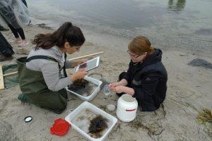 In der Ferienakademie unternehmen wir Expeditionen an der Strand