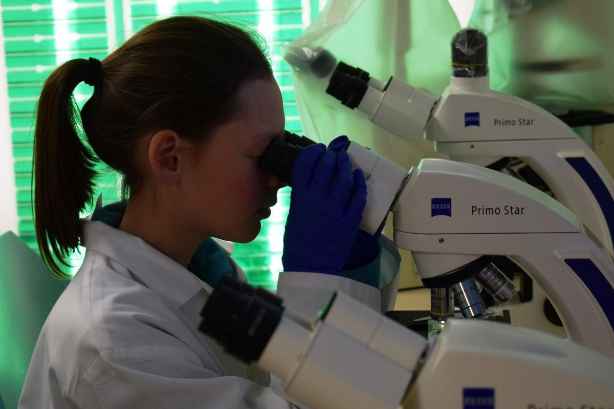 Ein Mädchen beim Mikroskopieren im Schülerforschungszentrum Kieler Forschungswerkstatt