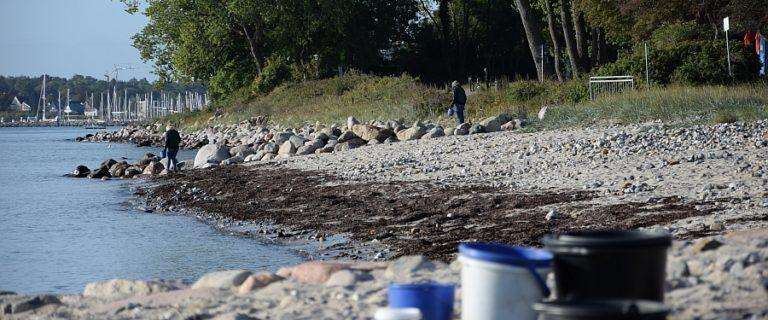 Beim der Reinigungsaktion zum Coastal Cleanup an der Kieler Förde sammeln zahlreiche Freiwillige auf vielen Kilometern Strandlinie Müll