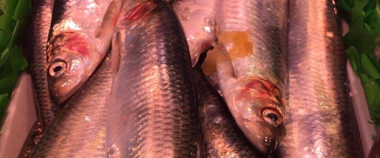 Beim Kurstag Fischerei erkunden die Schulklassen verschiedene Aspekte