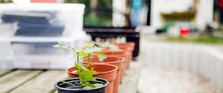 Im SFZ@Home Angebot Science Research Club erforschen die Teilnemenden beispielsweise, wo auf dem Balkon die Pflanzen am besten wachsen.