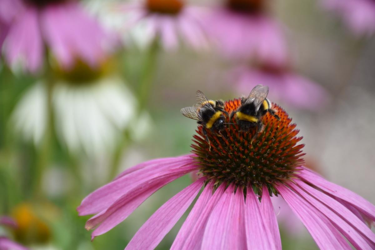 Um blütenbestäubende Insekten geht es in dem Projekt BlütenBunt-InsektenReich