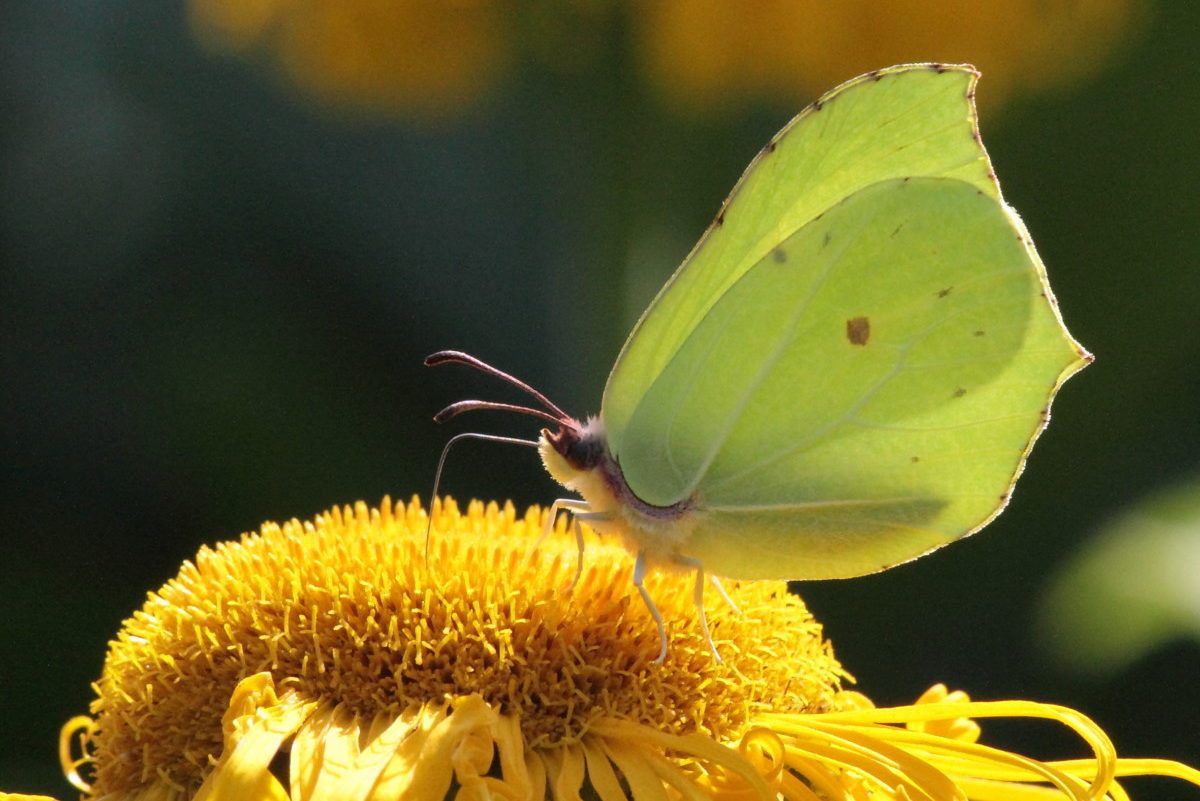 Im Projekt Blütenbunt-Insektenreich geht es um dden Schutz und die Förderung der Insekten-Vielfalt