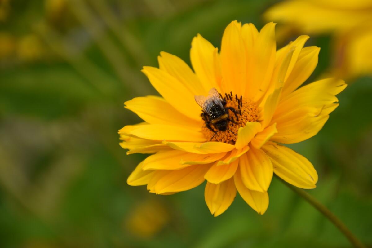Bestimmung von Insekten im Freiland