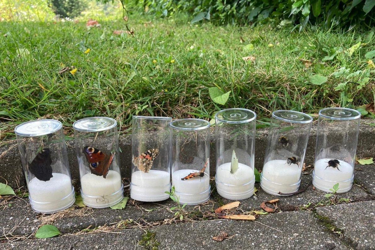 Fortbildung für Lehrkräfte: Bestimmung von Insekten im Freiland